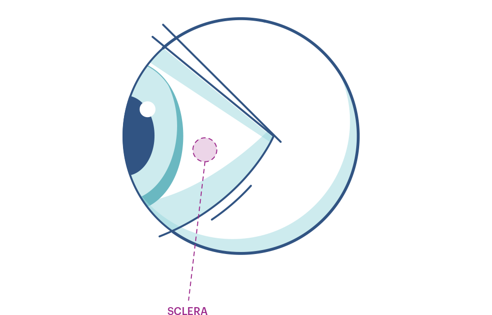 Grafika oka z zaznaczoną twardówką