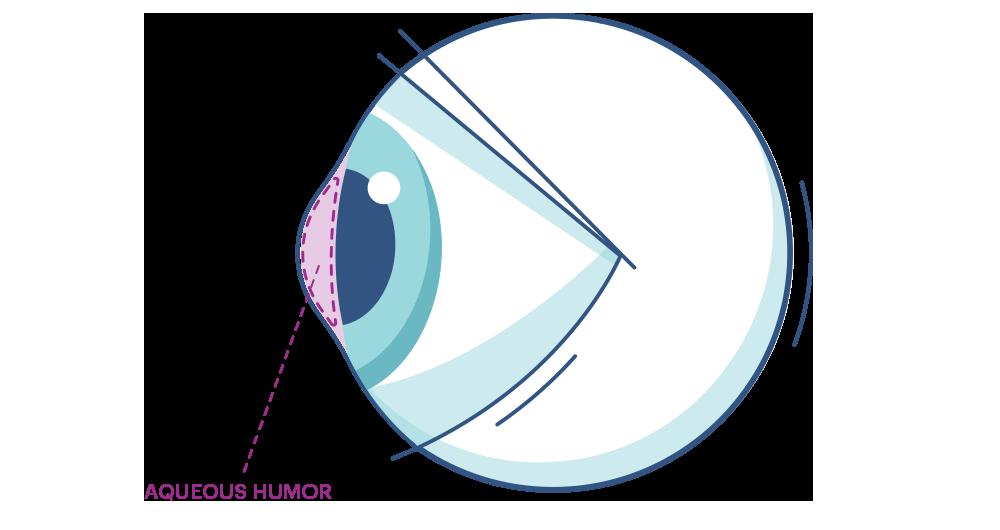Grafika oka z zaznaczoną warstwą wodną